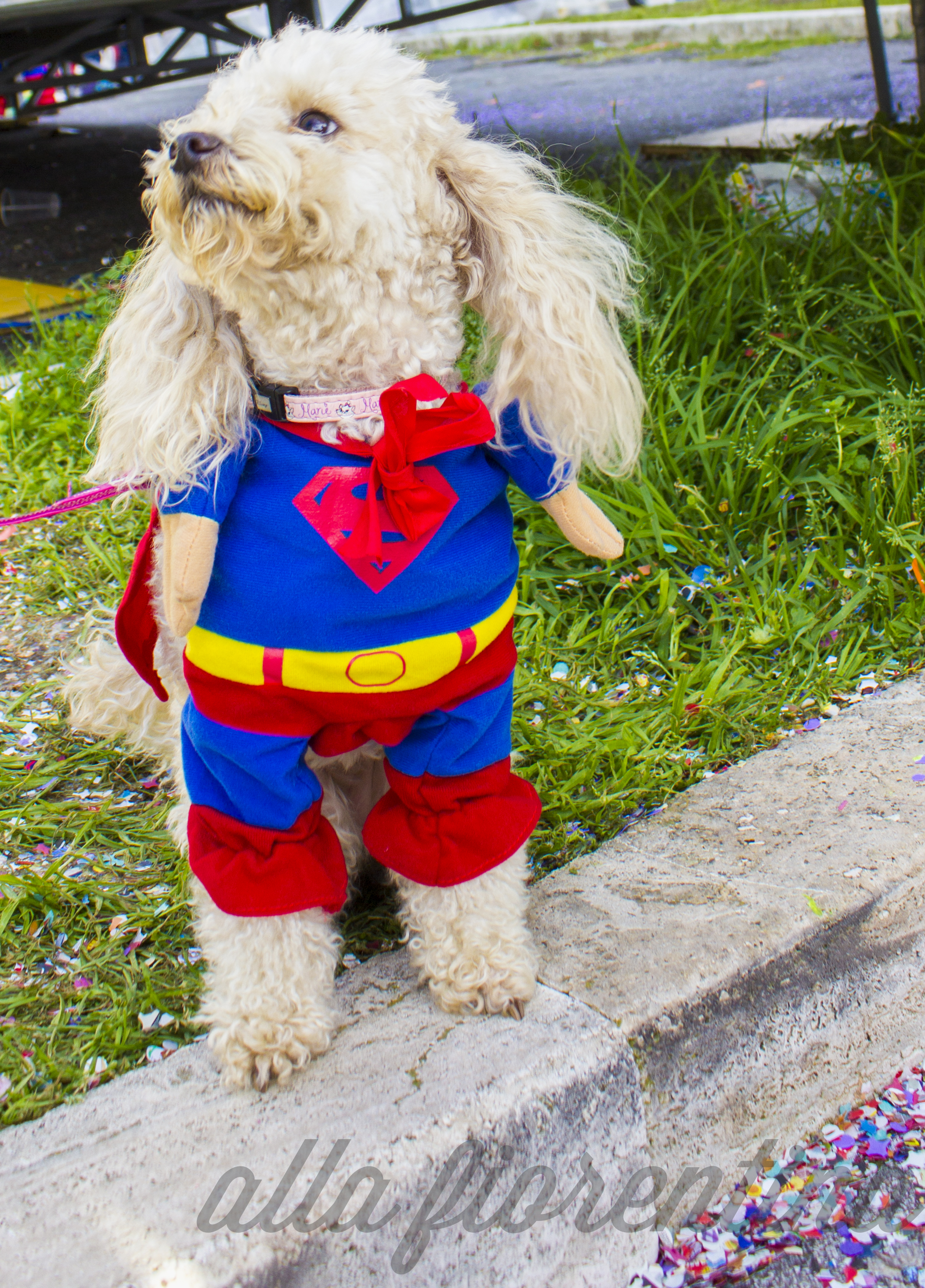 carnevale superman puppy
