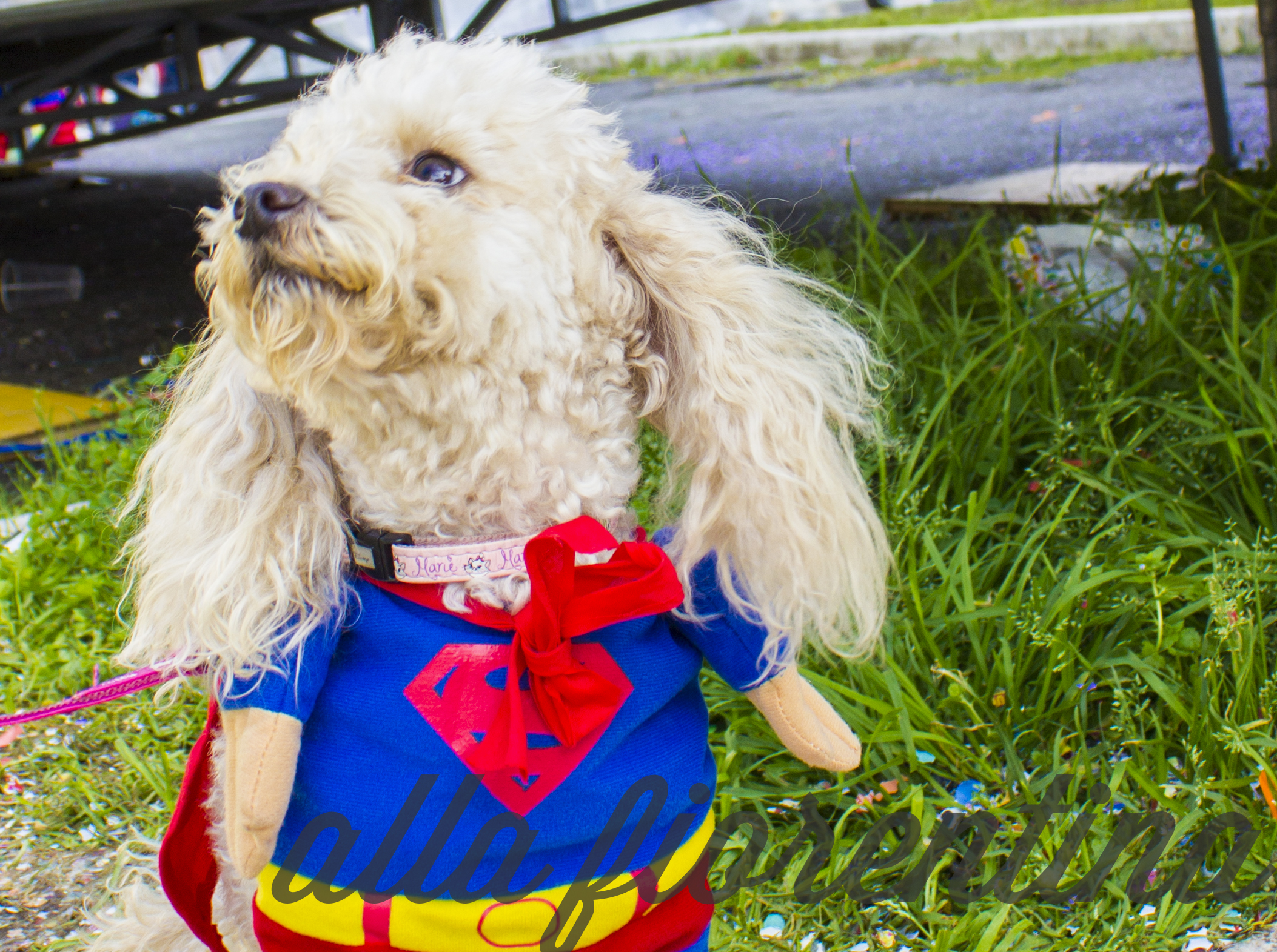 Superman Puppy At Carnival In Viareggio
