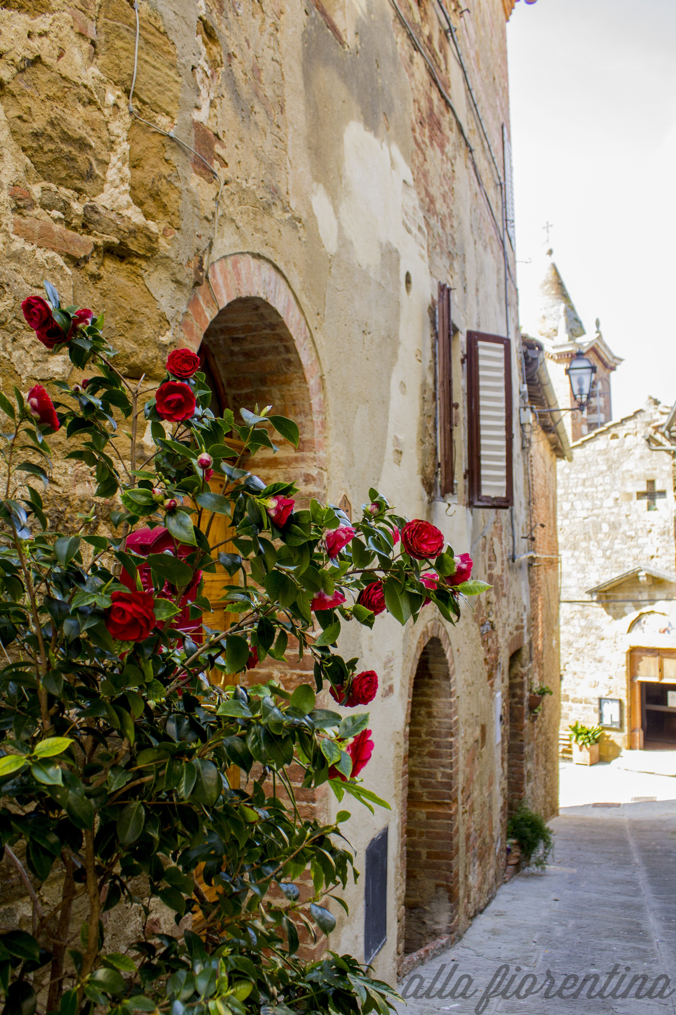 Roses In Tuscany Montisi